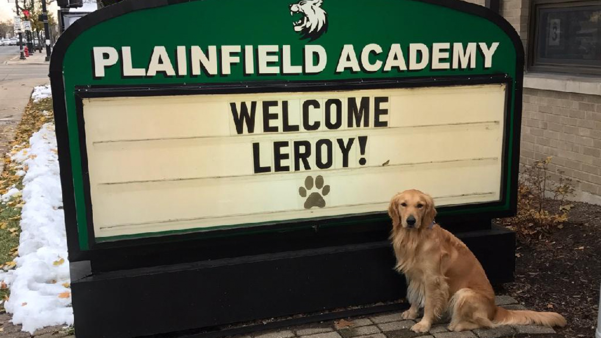 Leroy - Academy Therapy Dog